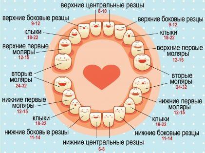 Схема при прорезывании зубов