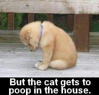 house   training...