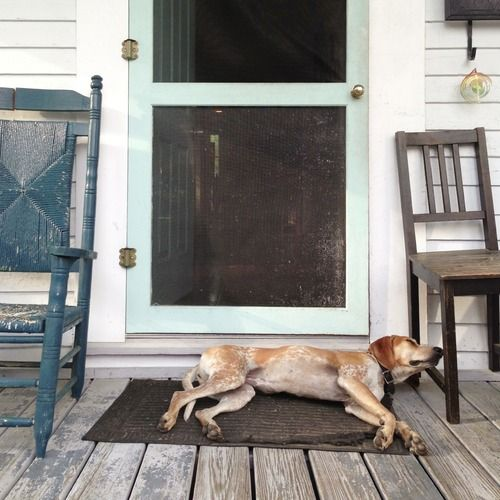 Southern porch dog | Southern Roots | Pinterest