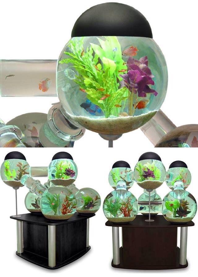 Cool fish tank million dollar mansion pinterest for Awesome fish tanks