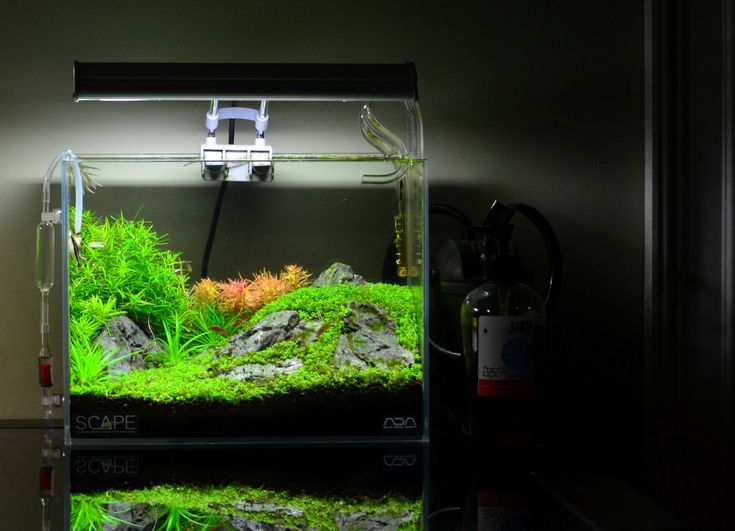 Nano Aquascape acuarios Pinterest