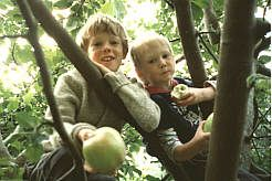 Fruit Trees - Eartheasy.com Solutions for Sustainable Living