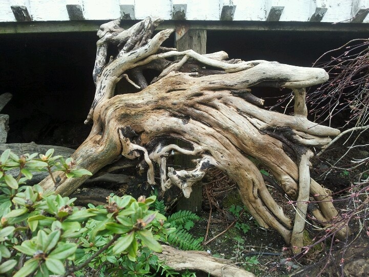 Landscaping With Driftwood : Driftwood use in landscaping home decor diy