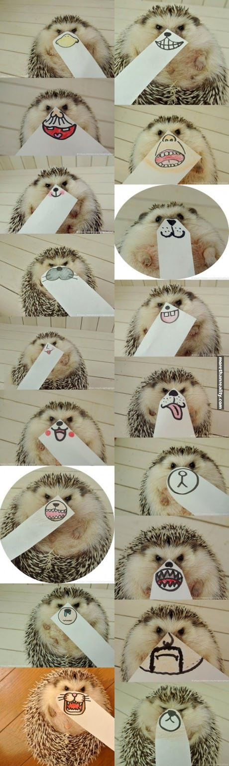 Funny drawings for a hedgehog