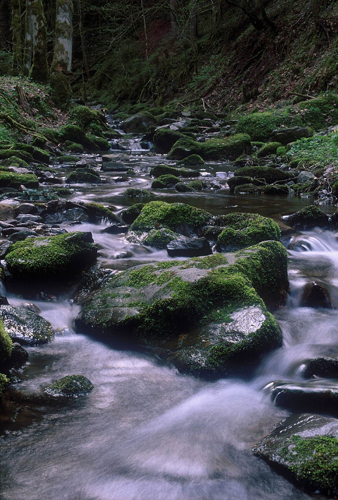 Black Forest Baden Germany Been There Done That Pinterest