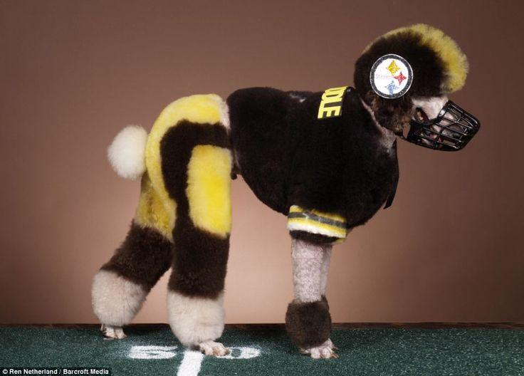 Pittsburg Steelers Poodle