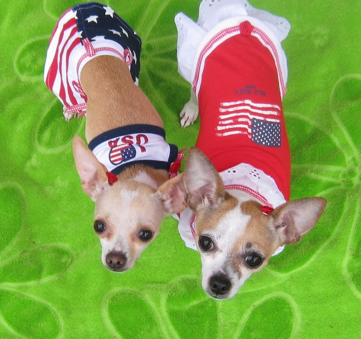 4th of july chihuahua images