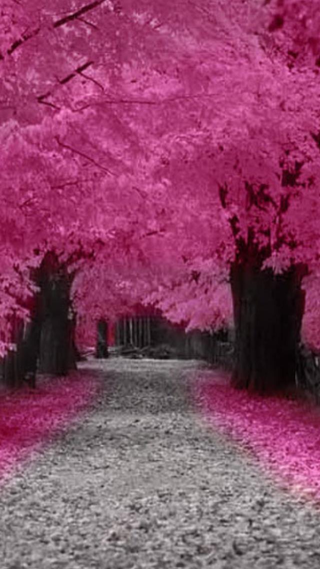 china landscape cherry trees - photo #9