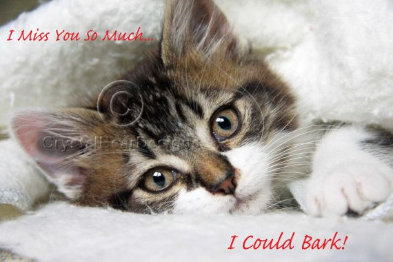 Kitten Cat Photo Greeting Card Photography by CrystalBearDesigns   5    Miss You So Much Cute