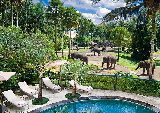 Elephant Safari Park Hotel Lodge, Bali  Guests can hang out in the on-site baby elephant nursery and catch the 29 resident Sumatran elephants performing in four shows per day. They roam the property, and you can admire them while you're lounging in the pool or dining in the restaurant.