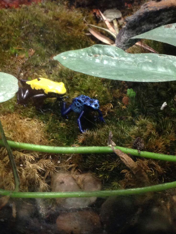 Poisonous Frogs Aquarium Wilmington Nc Photography