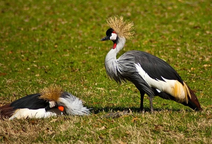 Cool looking Birds   Wild Life   Pinterest