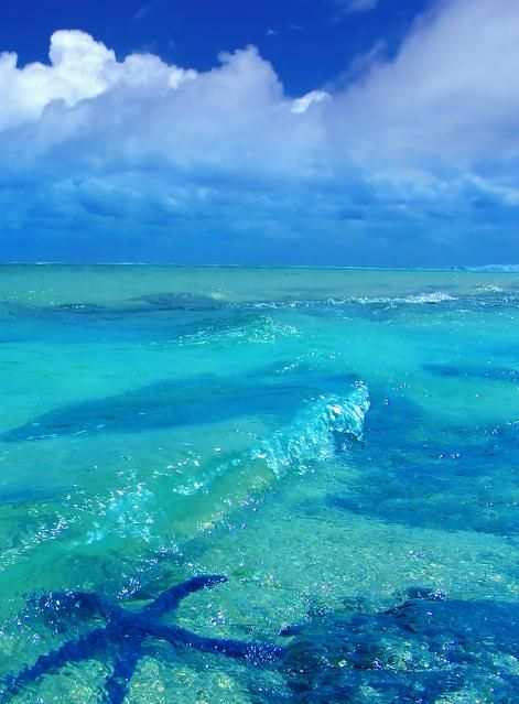Starfish underwater image from Bigstock