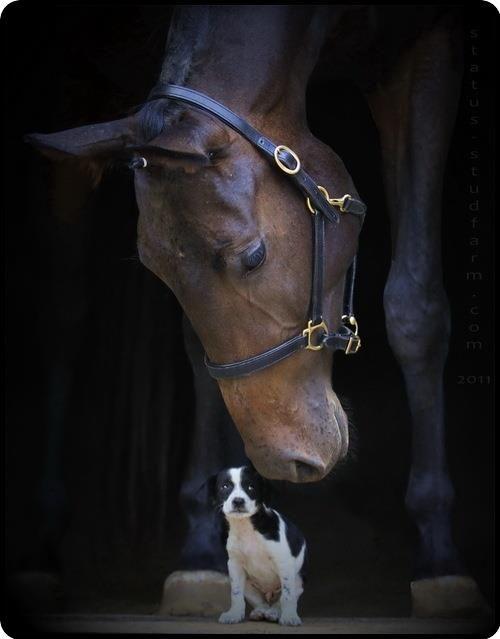 Big friend, little friend