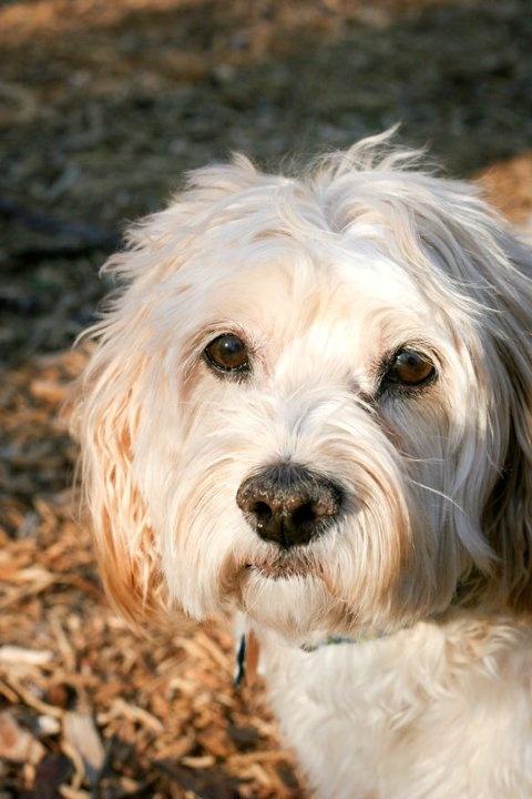 Henry Bentley (HB) my mutt rescue dog.