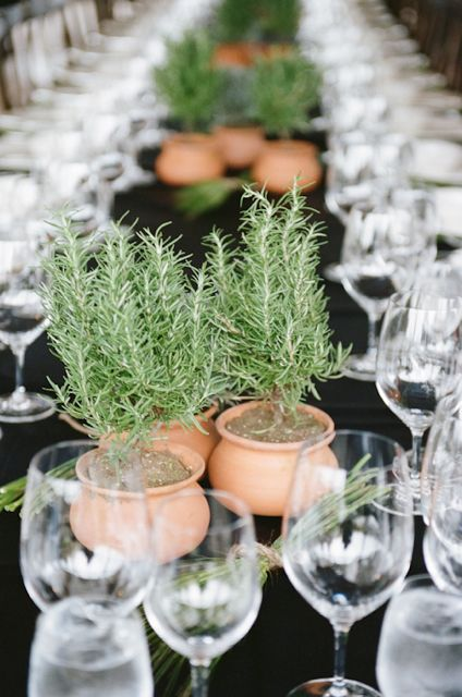 Rosemary centerpieces events pinterest