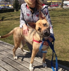 SHARE. Hannah is an adoptable German Shepherd Dog Dog in Bayside, NY ...