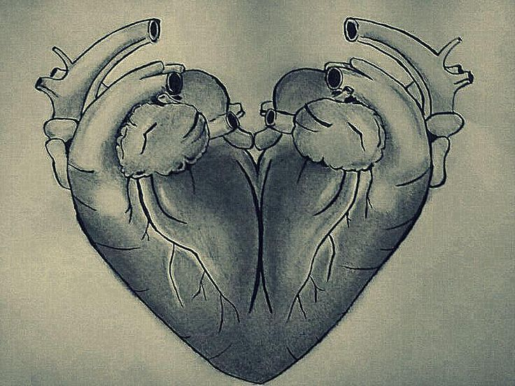Two Human Hearts Make One Stereotypical HeartHuman With Two Hearts