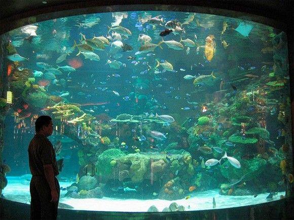 Aquarium casino nevada