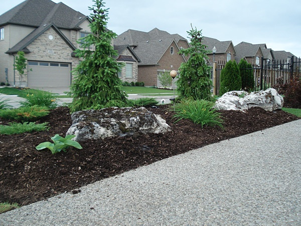 Moss Rock Boulders With Serbian Spruces Landscaping