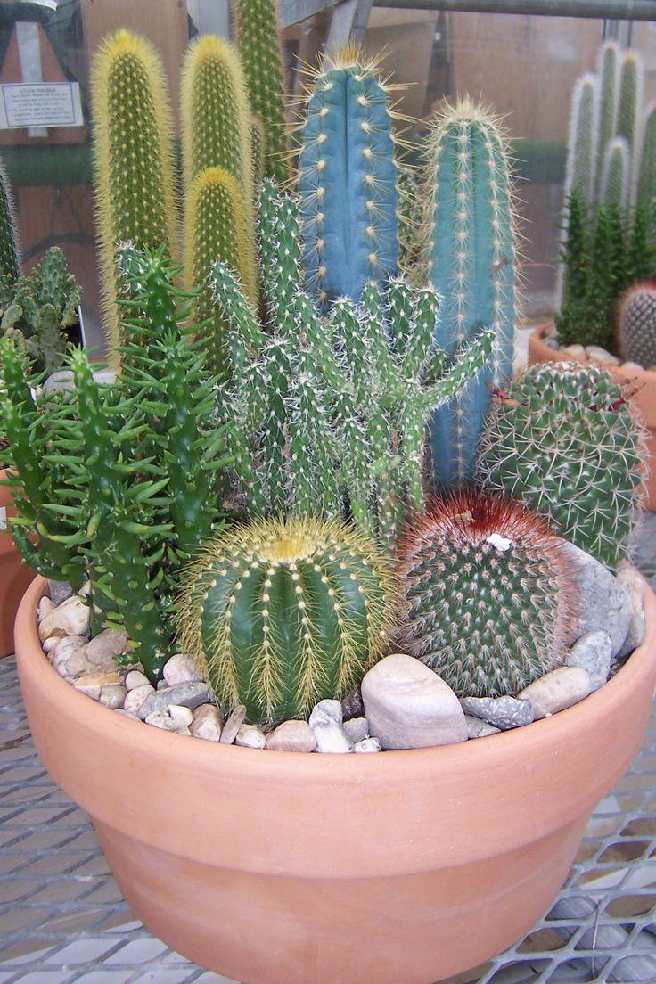 Cute cactus garden Around the gnome and down the garden