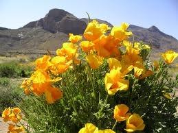 flowers el paso 79924