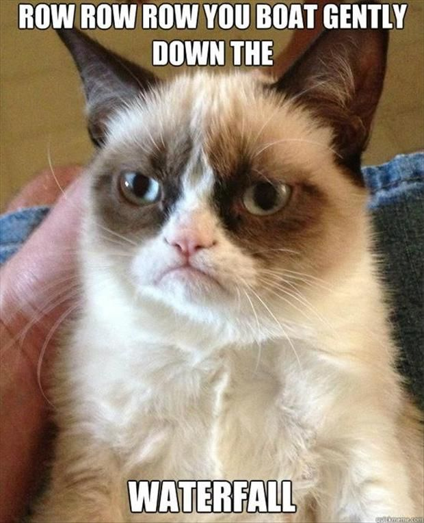 grumpy cat, row row row your boat, funny pictures
