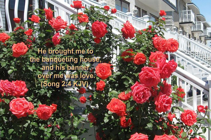 Song 2.4 KJV Bible Verse