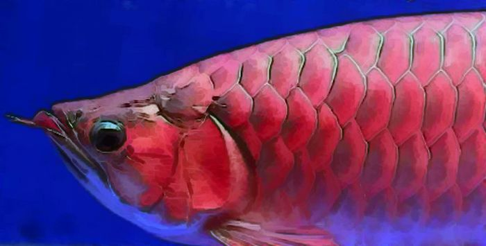 Unik, 7 Ikan Prasejarah yang Bertahan Hidup Sampai Saat ini