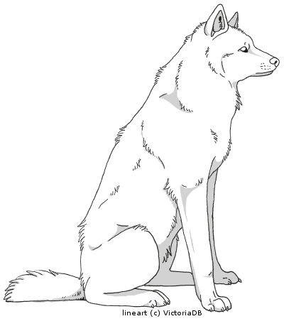 Wolf sitting down side view - photo#4