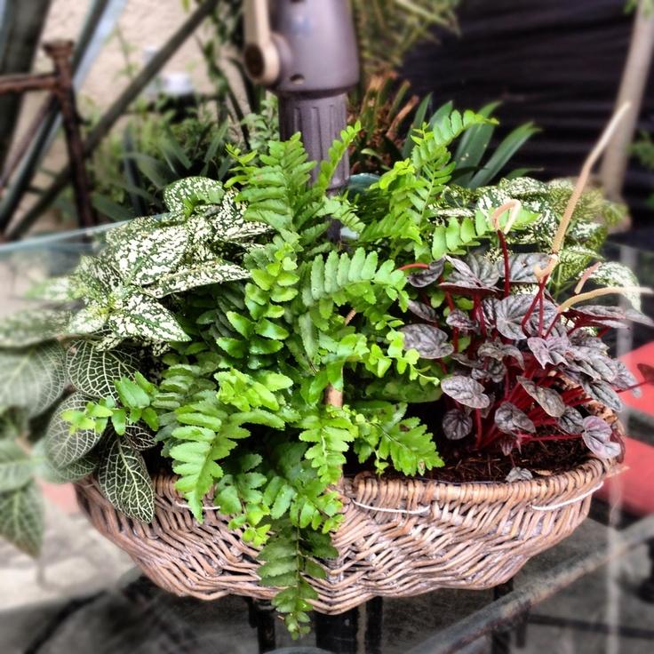 Plantas de sombra jardin pinterest for Arboles de sombra para jardin