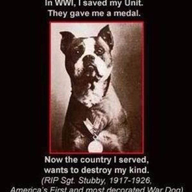 stubby world war i hero dog essay When we see thousands of pit bulls dying in shelters, being banned from cities and from neighborhoods.