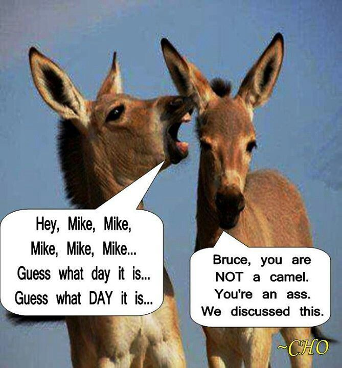 """Hump Day Humor """"Hey Bruce, Your an Ass Not a Camel"""""""