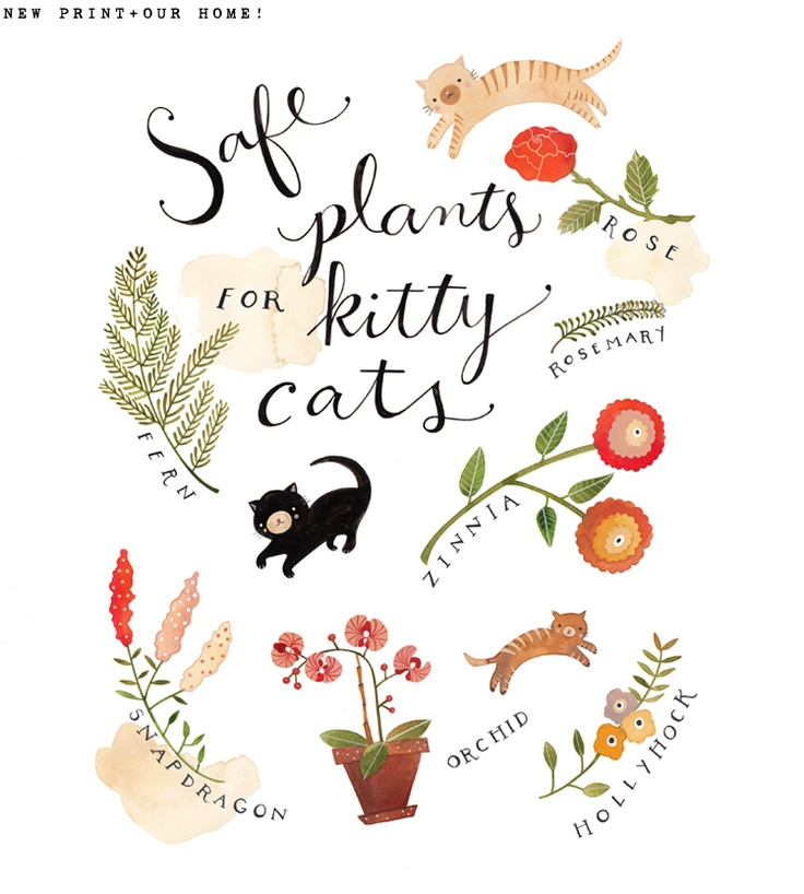 Dear Friend Safe Plants For Kitty Cats House
