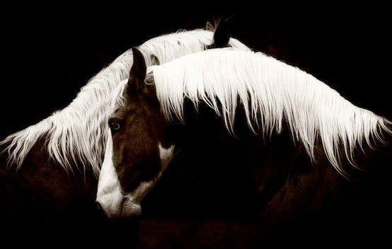 beats ear Horses  horses