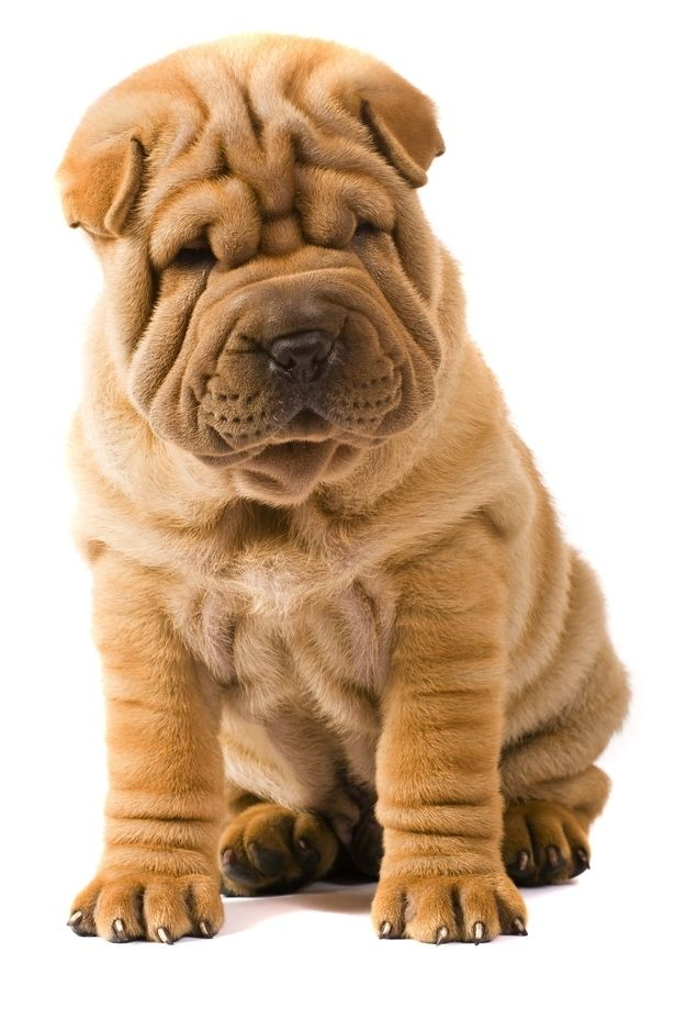 Dog With Rolls Of Fat Breed