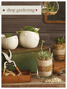 succulents are super popular. who cares. they're awesome.