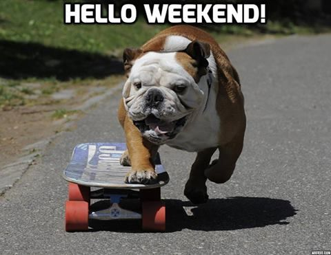 Image result for weekend animals