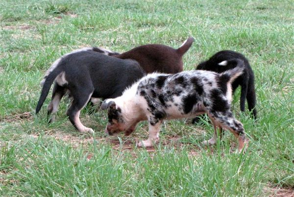 Dog Rescue Organisations Qld