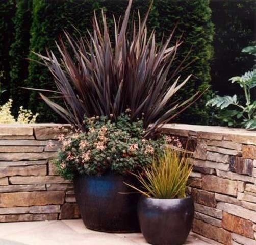 potted plants amarel patio project pinterest