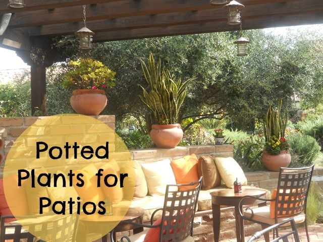 potted plants for patios gardening ideas pinterest