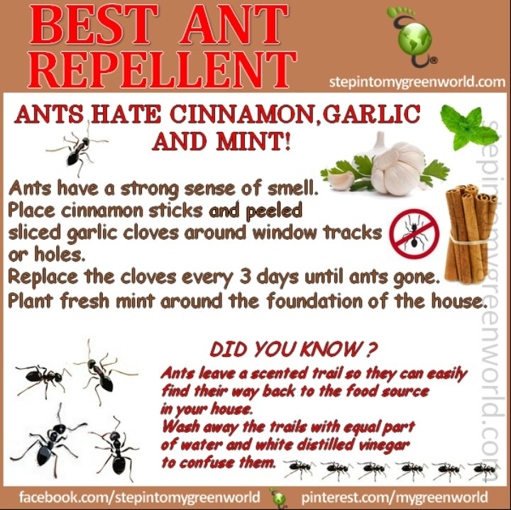Get rid of ants Natural News