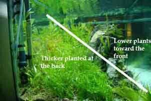 Aquascaping tips Aquascaping & Live Plants Pinterest