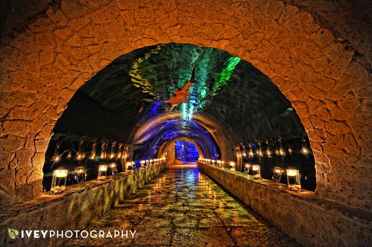 Dallas World Aquarium Shark Tank Tunnel Oh My God I Love