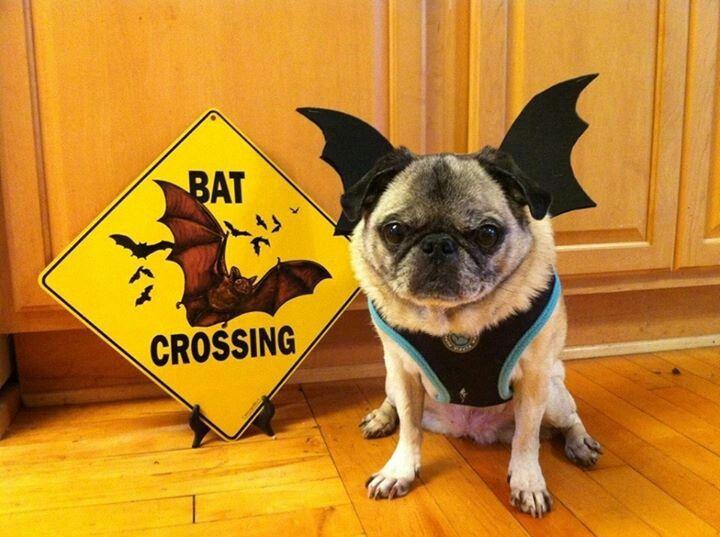 halloween pet pictures