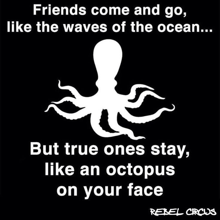 Octopus face