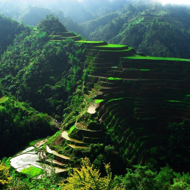 rice terrace fields, philippines