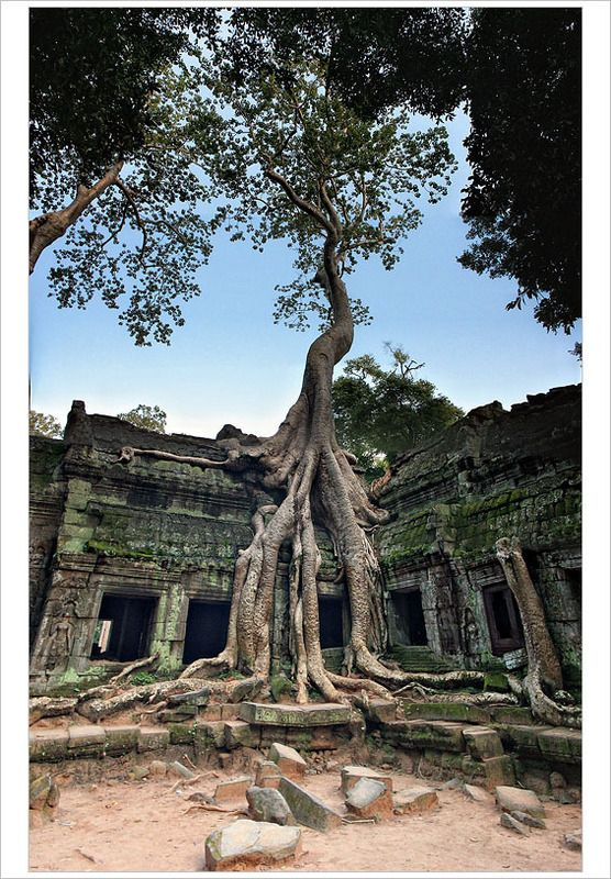 freat tree of ta pnom temple in the angkor complex, cambodia.