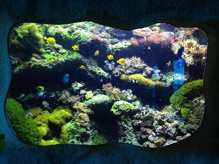Cool Aquarium Fish Tanks very cool!!!! Pinterest