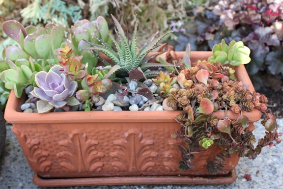 Succulent dish garden Succulent projects Pinterest